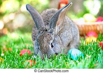 maličký, šedivý, králíček, hraní, do, ta, louka, s, ta, velikonoční obalit v rozšlehaných vejcích