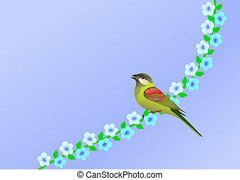 maličký, květiny, ptáček