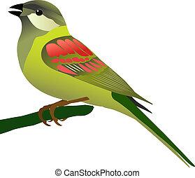 maličký, ptáček