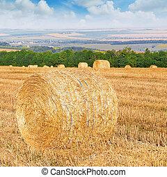maličkost, bojiště, pohroma, pšenice