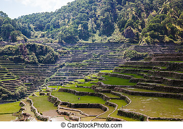 Maligcong rice terraces of the municipality in Mountain Province, Philippines