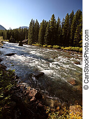 maligne, fiume, in, jasper parco nazionale