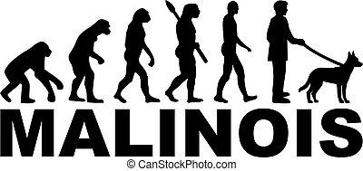 Malinois Evolution with name