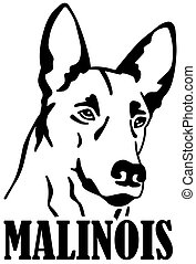 Malinois head with name