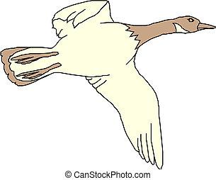 mallard duck flying