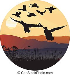Mallard ducks at sunrise and hilly