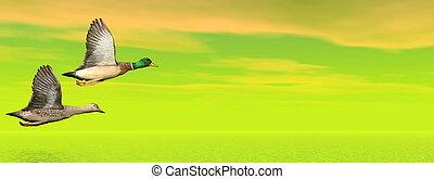Mallard ducks flight - 3D render