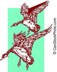 mallard kacsa, repülés