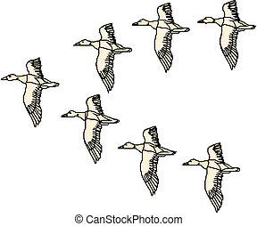 mallard, vliegen, eend