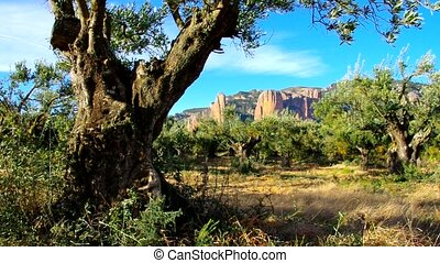 Mallos de Riglos in Aragon, Spain
