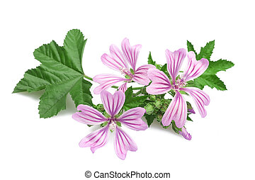 mallow flowers and leaves isolated on white background