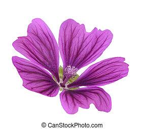 Mallow (Malva Sylvestris) - Mallow flower (Malva Sylvestris...