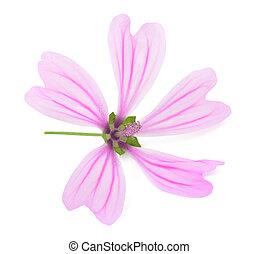 """Mallow (Malva Sylvestris) - Violet """"Common Mallow"""" flower (..."""