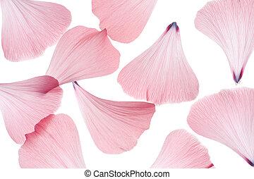 mallow petals - Studio Shot of Pink Colored Mallow Petals ...