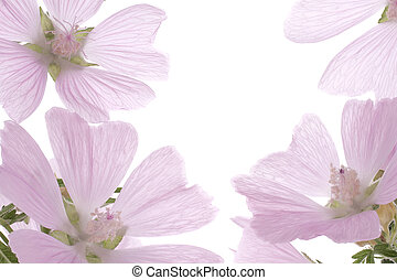 mallow - Studio Shot of Pink and Lilac Colored Mallow ...