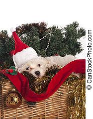 maltés, perro, en, adornado, navidad, cesta