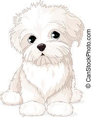 maltês, filhote cachorro, cão