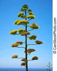 malte, plante, fond, agave, bleu ciel