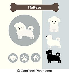 Maltese cane maltese frise bichon o dog for Cane razza maltese