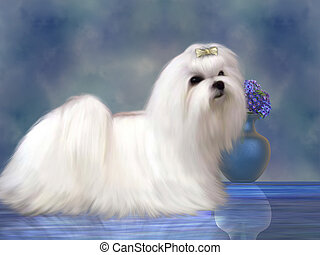 Maltese Dog - The Maltese dog is a small breed of dog in the...