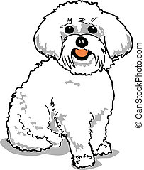 Maltese Dog - Maltese or Bichon Frise dog.