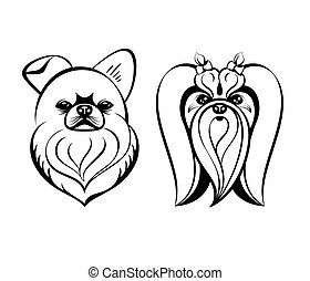 Maltese dogs - Maltese dog heads contour drawing isolated