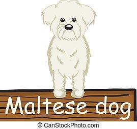 maltesisch, karikatur, ikone, hund