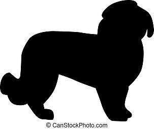 maltesisch, silhouette, hund