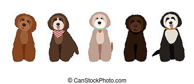 Maltipoo, australian labradoodle and poodle cartoon dogs set illustration.