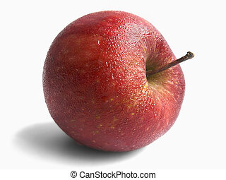 Malus pumila, Apple