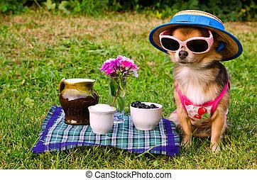malutki, pies, chodząc, żółty garnitur, słomiany kapelusz, i, okulary, odprężając, w, łąka