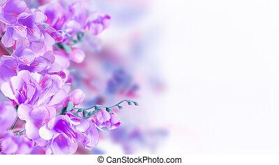 malva, flor, flores
