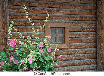Malva flowers against traditional wooden rural Ukrainian ...