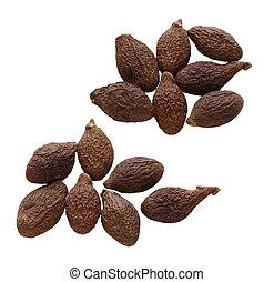 Malva Nuts - Sterculia lychnophora Hance, Malva nut ,Taiwan ...