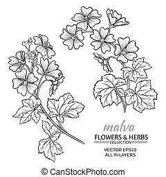 malva plant vector set on white background