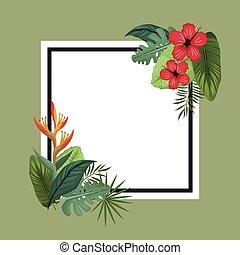 malwa, afisz, liście, tropikalny, dłoń, raj, ptak