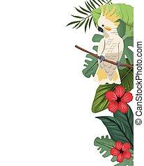 malwa, kakadu, liście, dżungla, karta