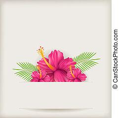 malwa, kwiaty, tło