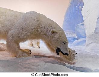 mamá, oso polar