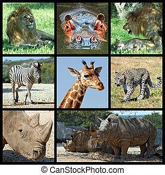mamíferos, áfrica, mosaico