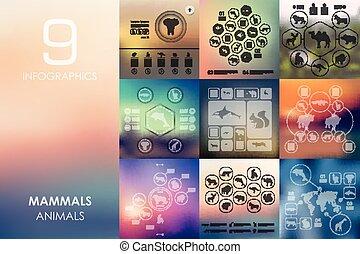 mamíferos, infographic, con, desenfocado, plano de fondo
