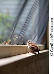 Mama bird feeds baby