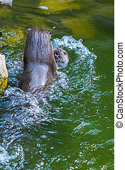 Mammal otter