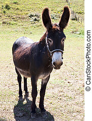 Mammalian farm - Domestic animal of donkey farm