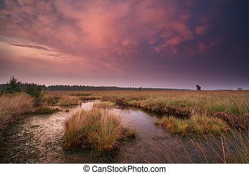 mammatus clouds over swamp at sunset, Drenthe, Netherlands