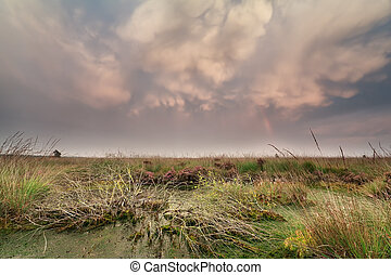 mammatus clouds over swamp at sunset, Netherlands