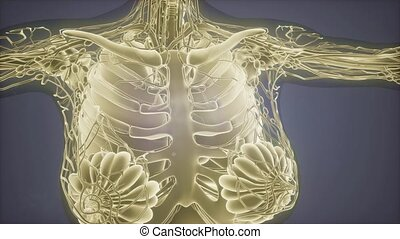 mammogram, cancer sein, imaging, diagnostic, radio