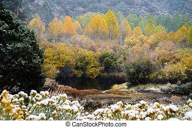 Mammoth Lakes, fall foliage, snow