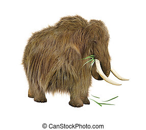 Mammoth on a white background