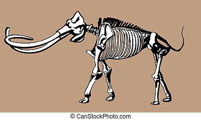 Mammoth Skeleton drawing.